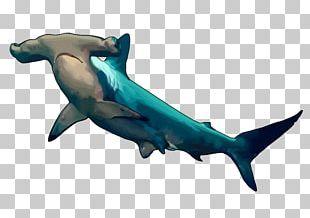 Hammerhead Shark Great Hammerhead Fish PNG