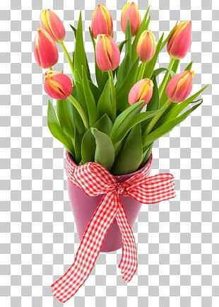 Tulip Cut Flowers Floral Design PNG
