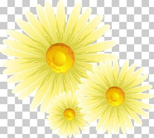 Chrysanthemum Common Daisy Flower PNG