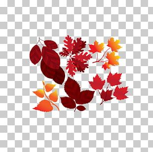 Maple Leaf Red Yellow Orange PNG
