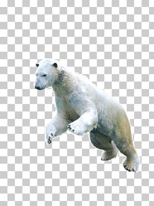 Polar Bear Asian Black Bear Arctic Fox Earless Seal PNG