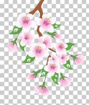 Branch Flower Floral Design PNG