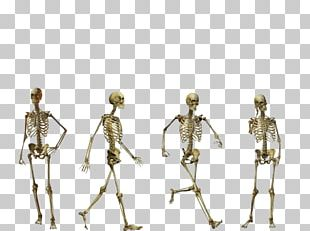 Homo Sapiens Flores Man Australopithecus Afarensis Human Skeleton PNG
