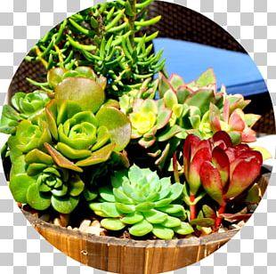 Succulent Plant Wedding Flower Bouquet Party Favor PNG