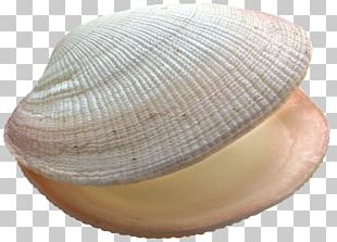 Shell PNG