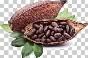 Criollo Organic Food Raw Foodism Tejate Cocoa Bean PNG
