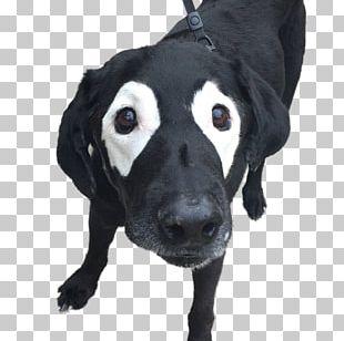 Labrador Retriever Puppy Bulldog Cat Pet PNG