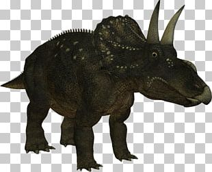Spinosaurus Tyrannosaurus Triceratops Horridus Dinosaur Ceratopsidae PNG
