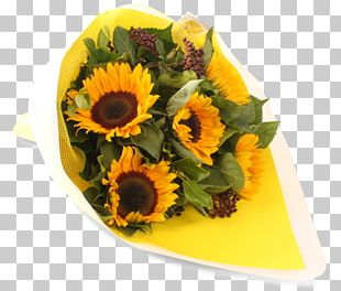 Floral Design Common Sunflower Cut Flowers Sunflower Seed PNG