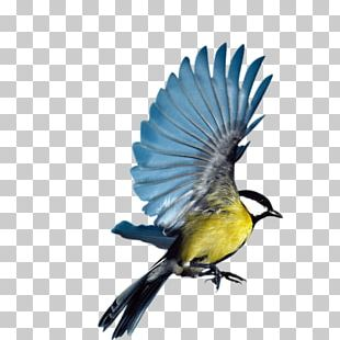 Bird Eurasian Magpie Flight Parrot PNG
