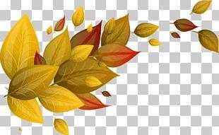 Autumn Leaf Euclidean Yellow PNG