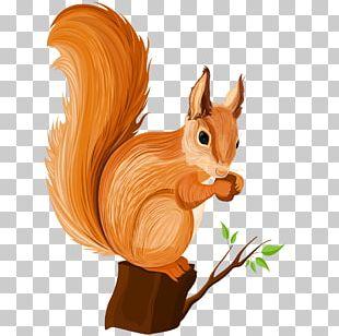 Chipmunk Squirrel Cartoon Illustration PNG