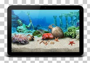 Coral Reef Fish Aquariums Ecosystem Marine Biology PNG