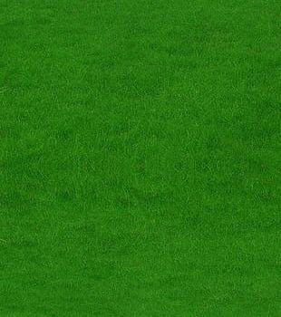 Grass PNG