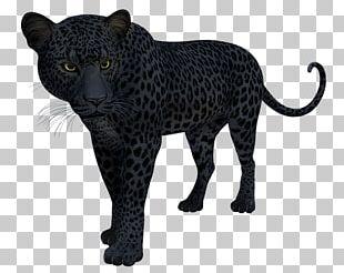 Black Panther Leopard Jaguar Cat T-shirt PNG