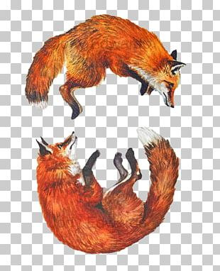 Red Fox Watercolor Painting Art Drawing PNG