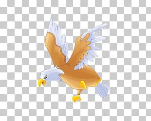 Bald Eagle Bird Hawk PNG