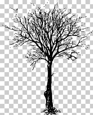 Tree Branch Drawing PNG