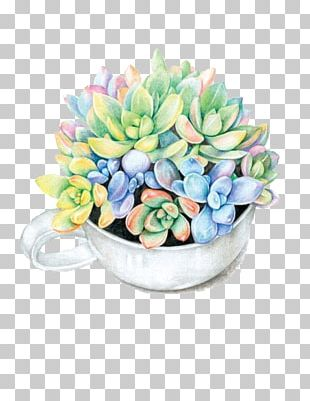 Paper Colored Pencil Succulent Plant Watercolor Painting Drawing PNG