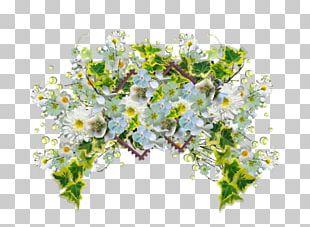 Floral Design Flower Bouquet Petal Cut Flowers PNG