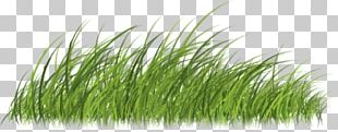Lawn Vetiver Designer Creative Work Copyright PNG