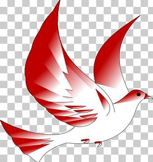 Columbidae Confirmation In The Catholic Church Symbol PNG