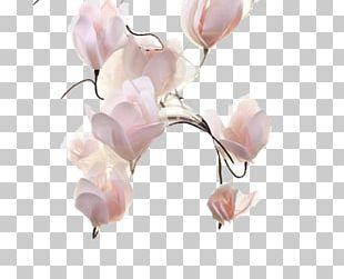Petal Cut Flowers Pink M Plant Stem PNG