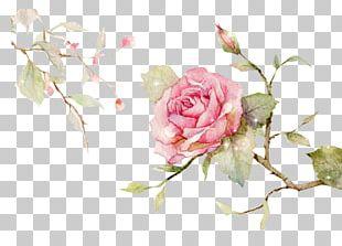 Centifolia Roses Garden Roses Floral Design Cut Flowers Flower Bouquet PNG
