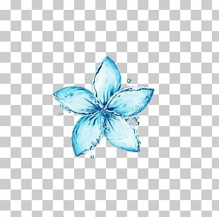 Flower Stock Photography Water Stock.xchng PNG