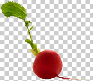 Patty Pan Radish Food Beetroot Potato PNG