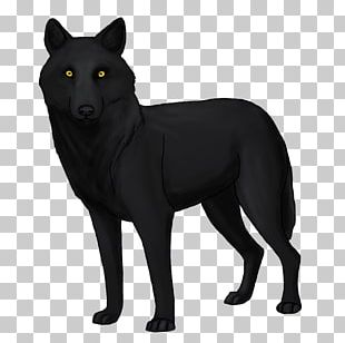 Schipperke Coyote Dog Breed Black Wolf Drawing PNG