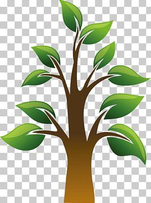 Dietary Supplement Health Blood Sugar Pinus Pinaster Tree PNG