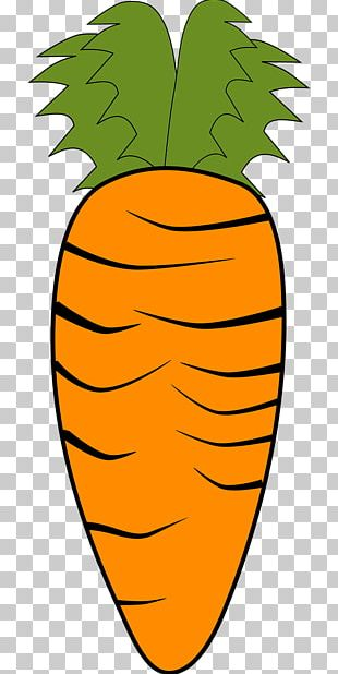 Carrot Vegetable Organic Food PNG