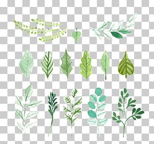 Leaf Green Painting PNG