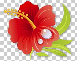 Petal Shoeblackplant Drawing Flower Hawaiian Hibiscus PNG