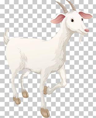 Sheep Boer Goat Highland Cattle Pasture Caprinae PNG