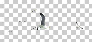Water Bird Beak Pattern PNG