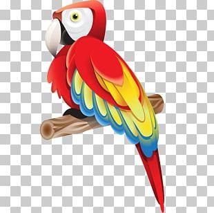Adobe Illustrator Tutorial Graphic Design PNG