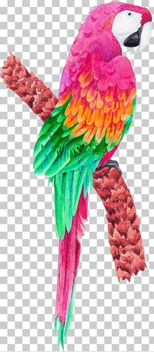 Bird Parrot PNG