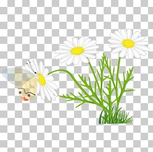 Butterfly Free Content PNG