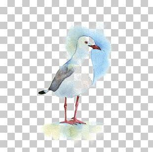 Gulls Bird Watercolor Painting Drawing PNG