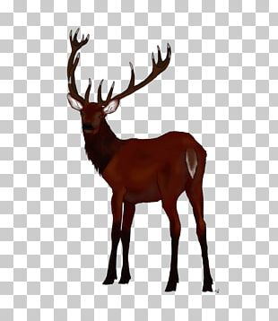 Reindeer Red Deer Elk White-tailed Deer PNG