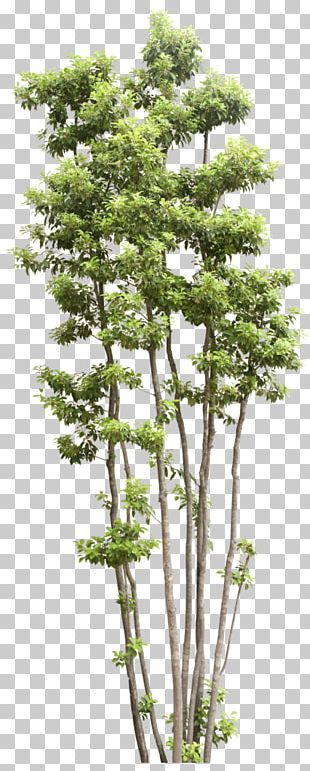 Tree Shrub Transparency And Translucency PNG