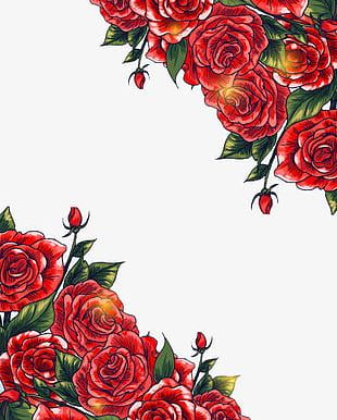 Red Roses Background PNG