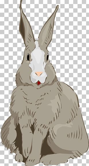Domestic Rabbit Hare Easter Bunny Cottontail Rabbit PNG