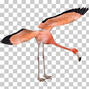 Zoo Tycoon 2 American Flamingo Greater Flamingo Bird PNG
