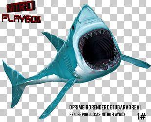 Requiem Sharks Tubarão Great White Shark Brazilian Real PNG