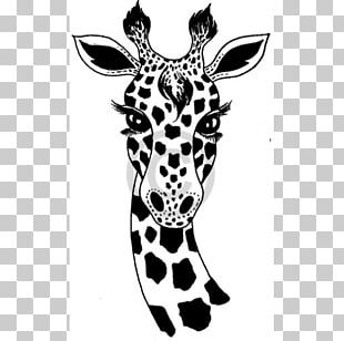 Giraffe Drawing Black And White Art PNG