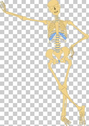 Human Skeleton Bone Skull PNG