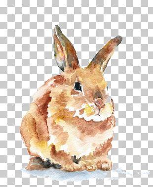Domestic Rabbit Watercolor Painting Art Drawing PNG